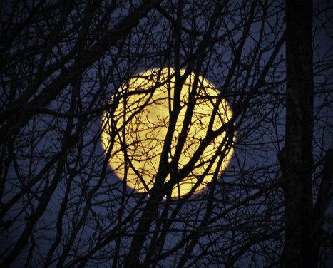 Les scientifiques démolissent le mythe de la pleine Lune | Dr. Goulu | Scoop.it