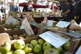 Recuperen les antigues pomes de la Garrotxa | consum sostenible | Scoop.it