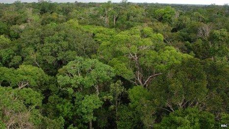 Brazil builds giant Amazon tower | Peer2Politics | Scoop.it