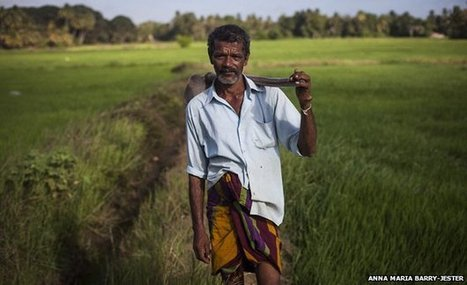 Thousands of Sri Lanka Farmers Dying: Study Links Kidney Disease to Agrochemicals, Pesticides | YOUR FOOD, YOUR ENVIRONMENT, YOUR HEALTH: #Biotech #GMOs #Pesticides #Chemicals #FactoryFarms #CAFOs #BigFood | Scoop.it