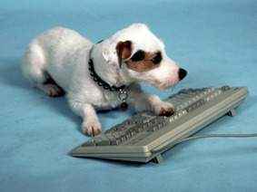 Smartest Dog Breeds | Animal Health | Scoop.it