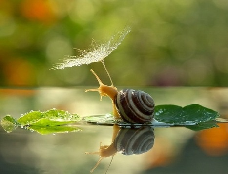 Spectacular Macro Details Reveal the Intimate Life of Snails | Le It e Amo ✪ | Scoop.it