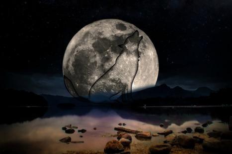 Dossier > Rêver : le monde fascinant des rêves | Cerveau intelligence | Scoop.it