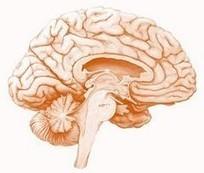 Comprendre le cerveau du corps en mouvement | Fonctionnement du cerveau & états de conscience avancés | Scoop.it