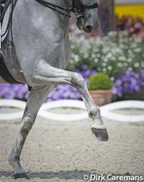 Training horses. Impulsion.  What does it mean? | Horses! Horses! Horses! | Scoop.it
