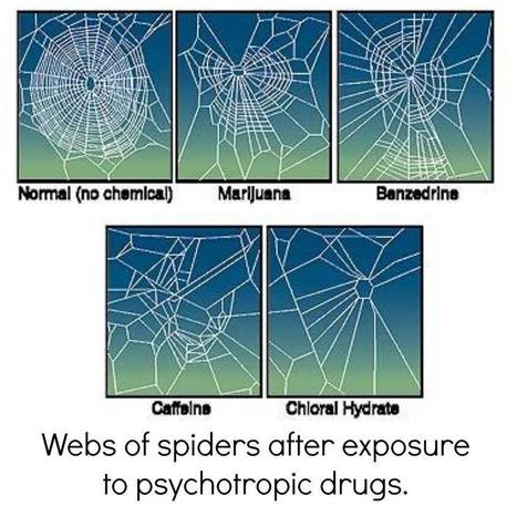 Web of Spiders after Exposure to Psychotropic Drugs | 100 inspirations | Scoop.it