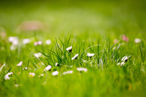 12 Beautiful Green Grass Field HD Wallpapers - OSXDaily | iPads in Education | Scoop.it