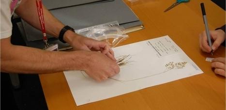 Herbarium | The National Botanic Garden of Wales | Herbaria | Scoop.it