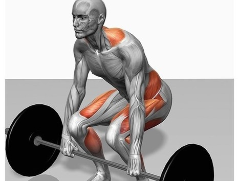 Technique how to master the deadlift   Fitness, Health, Running and Weight loss   Scoop.it