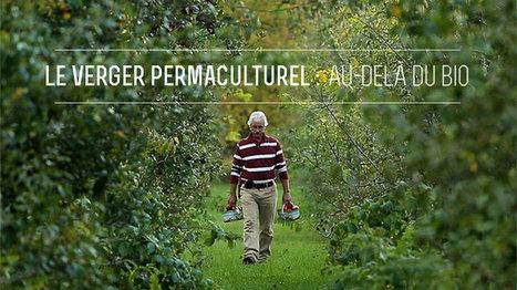 Les sciences en écologie et les pommes : une histoire de permaculture ! - Bioécologie | Web and humain dreams | Scoop.it