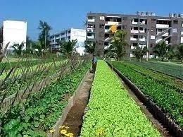 Noticias de Prensa Latina - Apoya Cuba a otros países en agricultura urbana | Cultivos Hidropónicos | Scoop.it