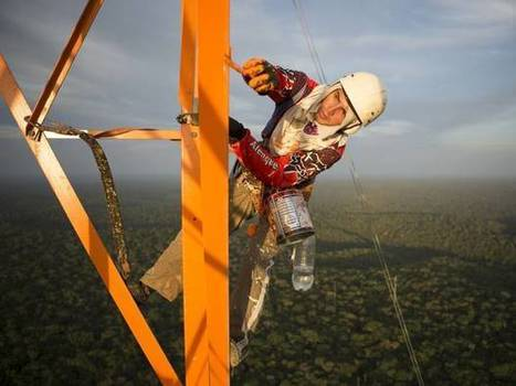 The Amazon tower that gives scientists the big picture of the rainforest - The Independent | Rainforest EXPLORER:  News & Notes | Scoop.it