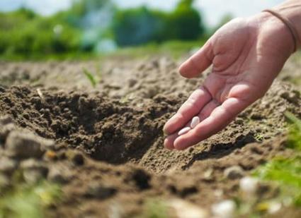 L'agriculture emploie 62% des femmes actives en Afrique | Questions de développement ... | Scoop.it