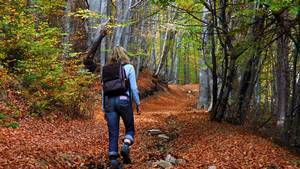 Why is walking in the woods so good for you? | attention | Scoop.it