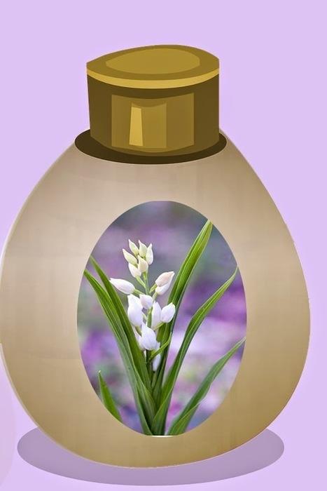 Recette de crème anti-rides aux lys blancs, miel et cire végétale, à l'ancienne | Beauté, santé, des soins, des cosmétiques naturels aux plantes, à fabriquer soi-même | Scoop.it