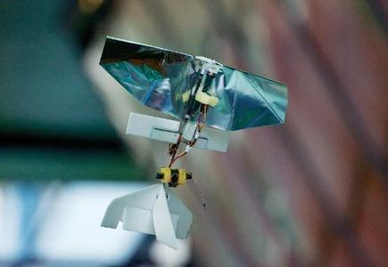 Dutch scientists flap to the future with 'insect' drone | leapmind | Scoop.it