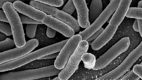 Scientists want to replace lab workhorse E. coli with the world's fastest-growing bacterium | SynBioFromLeukipposInstitute | Scoop.it