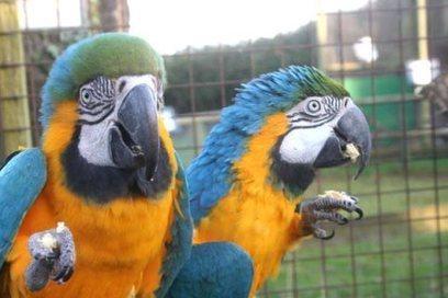 طيور و حيوانات - سوق المغرب صفحة: 1 - 20   sogarab   Scoop.it