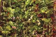 Végétaliser un mur | Constructions écologiques et durables | Scoop.it