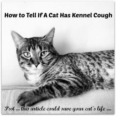 Kennel Cough Symptoms in Cats | Breeds of Cats | Scoop.it