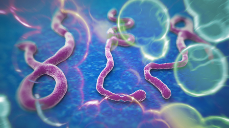 Ebola Virus Disease – History, Causes, Symptoms and Prevention | Walk In Clinic in Naperville, Lisle | Doctors Immediate Care | Scoop.it