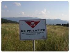 Notizie: Usare api per trovare le mine inseplose in Croazia | coscienza universale | Scoop.it