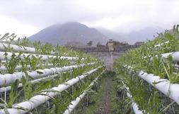 Que son los cultivos hidropónicos? | Cultivos Hidropónicos | Scoop.it