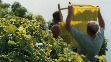 Dézaley et Calamin deviennent des AOC | Veille sur le vin | Scoop.it