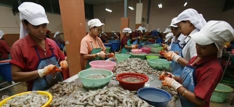 Vous mangez peut-être des crevettes nourries par le travail d'esclaves | Consommation alternative | Scoop.it