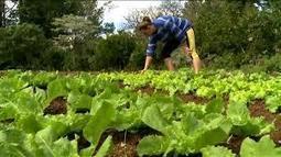 PREOCUPACIÓN DE AGRICULTORES MISIONEROS | Nuevos modelos alimentarios y agropecuarios | Scoop.it