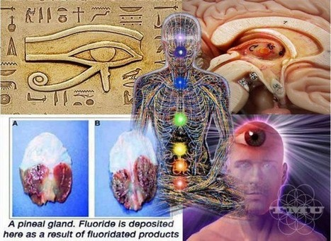 Fractal Enlightenment | The Meaning of the Pineal Gland | Spirituality | Scoop.it