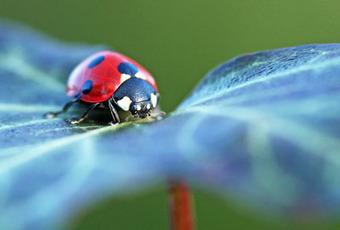 Journée mondiale de la biodiversité – 22 mai | Ca se passe au jardin | Biodiversité NC | Scoop.it