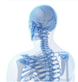 Get Strong Bones With Bonexci   Health and Fitness   Scoop.it