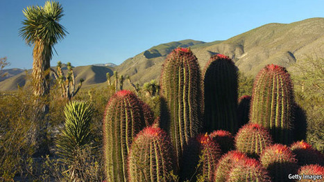 Making the desert bloom | Comparative Government and Politics | Scoop.it