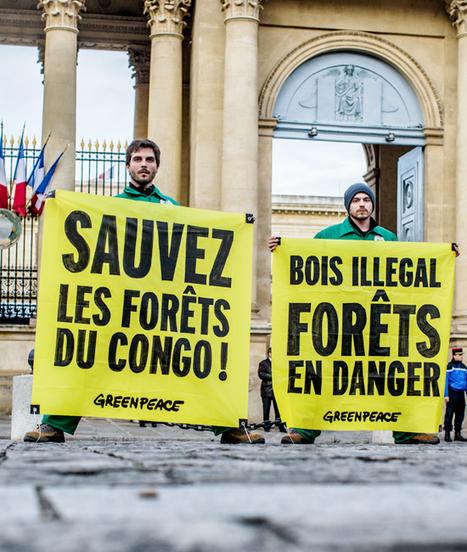 Bois volé - vies volés : la crise silencieuse du trafic de bois   Nature Animals humankind   Scoop.it