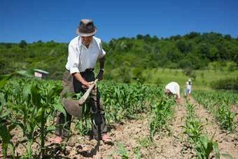 Small Farms Fight Back: Food and Community Self-Governance | Food issues | Scoop.it