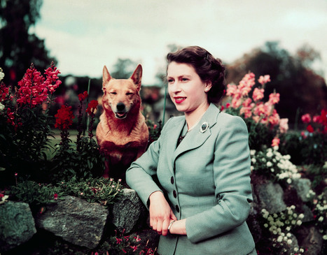 Queen Elizabeth and Her Corgis: A Love Story | Memoirs of a Chonga | Scoop.it