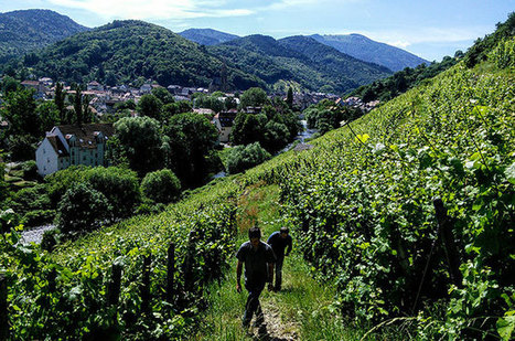 Jefford on Monday: The ultimate terroir wine (Alsace) | Vitabella Wine Daily Gossip | Scoop.it