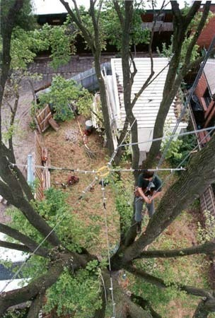 What Is Tree Lopping? | Choosing the Best Tree Services in Brisbane | Scoop.it