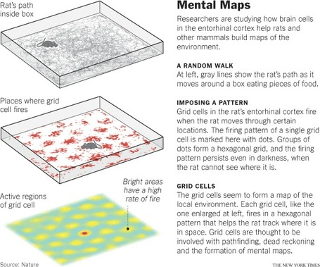 Exploring the Brain's GPS | Geography Education | Scoop.it