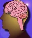 6 facteurs de santé pour fortifier le cerveau | Productivité et santé au travail | Scoop.it