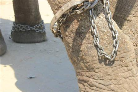 Free the elephants   Wildlife SOS' Fundraiser on CrowdRise   Projects We Love   Scoop.it