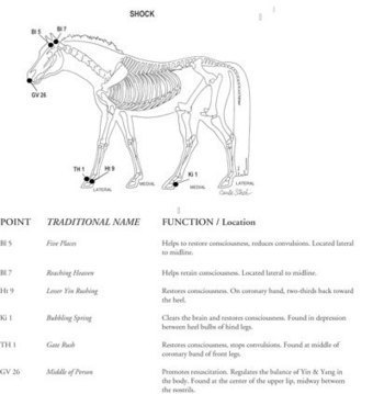 Natural Horse Magazine | Holistic Horses from PENZANCE Equine Integrative Solutions | Scoop.it
