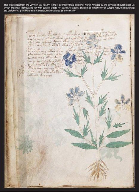 Tajemniczy rękopis Wojnicza to tekst Azteków? Nowa hipoteza | books, manuscripts and old prints | Scoop.it