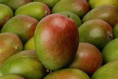 [Tutoriel] Obtenir Mango à coup sûr. | WindowsPhoneFR.com ... | Smartphones&tablette infos | Scoop.it