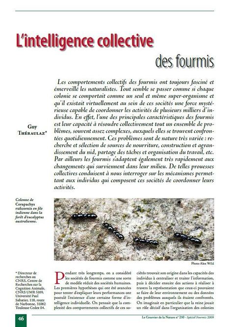 [Article en ligne] Le Courrier de la Nature n° 250 - Spécial Fourmis 2009 | Insect Archive | Scoop.it
