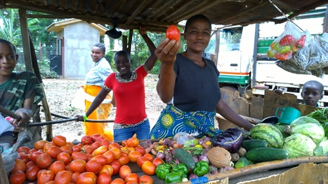 Local seed slows down development of Africa - Farming Africa   FarmingAfrica.net   Scoop.it