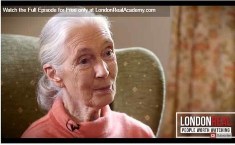 Jane Goodall and How We Can Change Our Lifestyle, shared by London Real | Empathy and Animals | Scoop.it