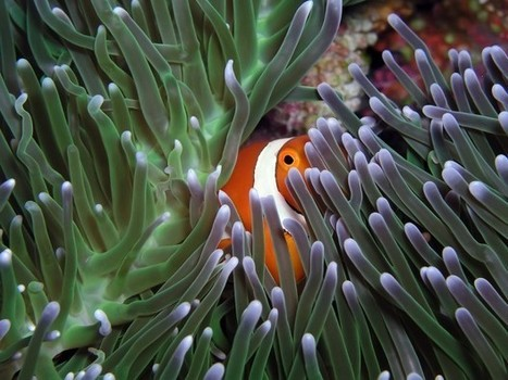 Health of Great Barrier Reef no barrier to Australian industry - Asian Correspondent | Biophysical Environment | Scoop.it
