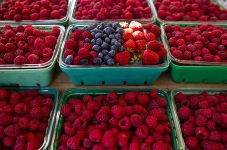 Quebec's raspberries are a centuries-old tradition | This Gives Me Hope | Scoop.it